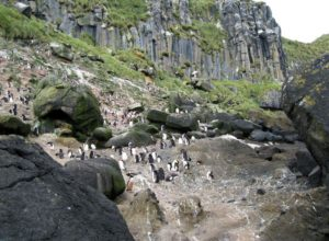 Anchorage Bay and penguins, Antipodes Islands