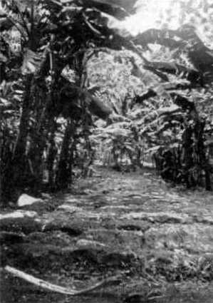 Ara Metua - section with basalt slabs, Cook Islands