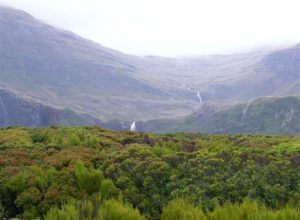 Landscape in the western part of Auckland Island