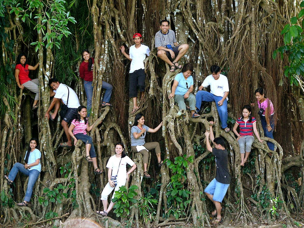 Balete tree in Maria Aurora, Philipppines