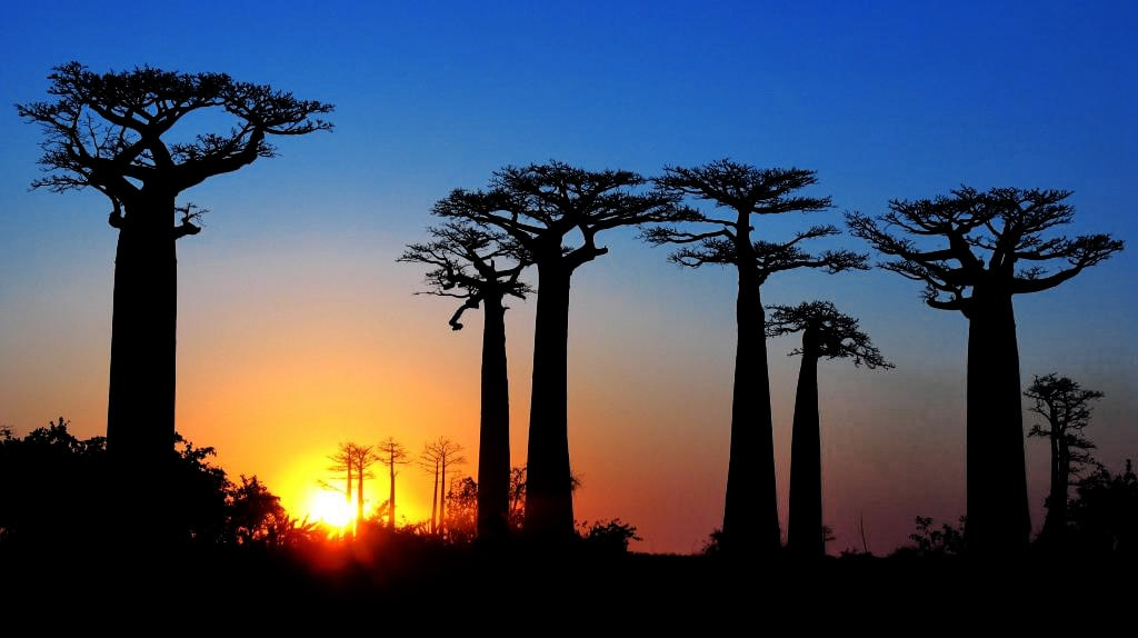 Avenue of the Baobabs, Madagascar, evening