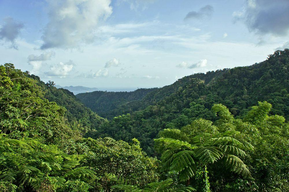 Rainforest near Balata, Martinique