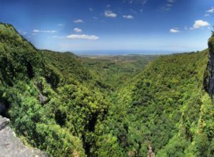 Primeval forest in Black River Gorges, Mauritius