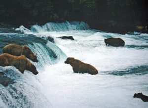 Brooks Falls with bears, Alaska