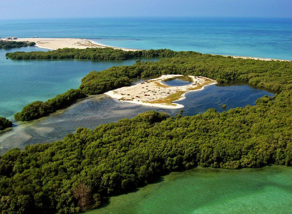 Mangrove forest in Bu Tinah, United Arab Emirates