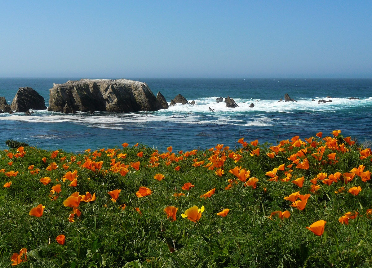 Point Buchon poppy meadows, California