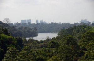 The virgin Bukit Timah rainforest and city of Singapore in the background