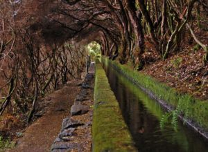 Water supply channel in laurel forest, Madeira