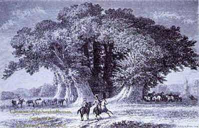 Chestnut Tree of One Hundred Horses, Sicily