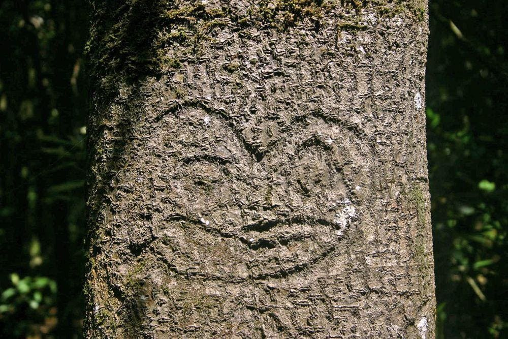 Dendroglyph in Rehoa island, Chatham Islands