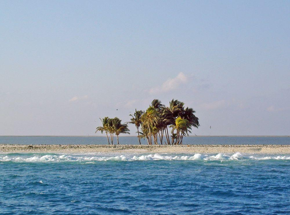 Clipperton Island. One of the rare groups of cocos palms is seen, lagoon is seen in the background