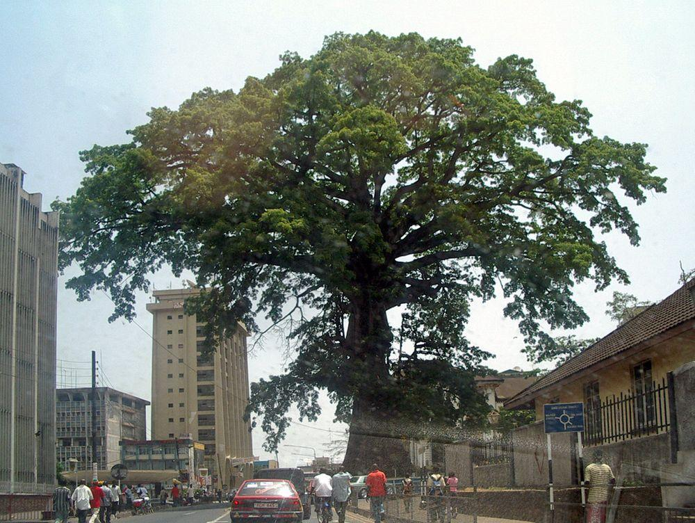 Freetown Cotton Tree, Sierra Leone