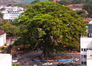 Cotton Tree in Freetown, SIERRA LEONE