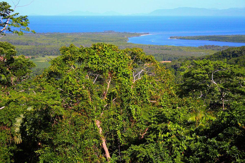 The Daintree Rainforest, Queensland