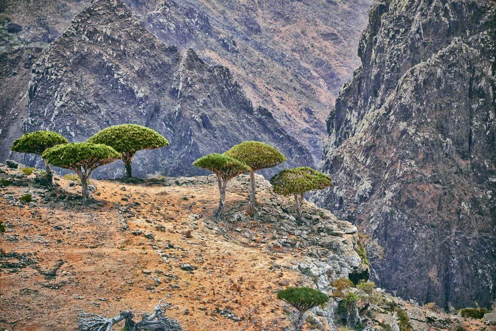 Dragon's Blood Trees and the dramatic ravines of Socotra