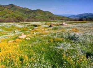 Meadows of Dry Creek Preserve, California