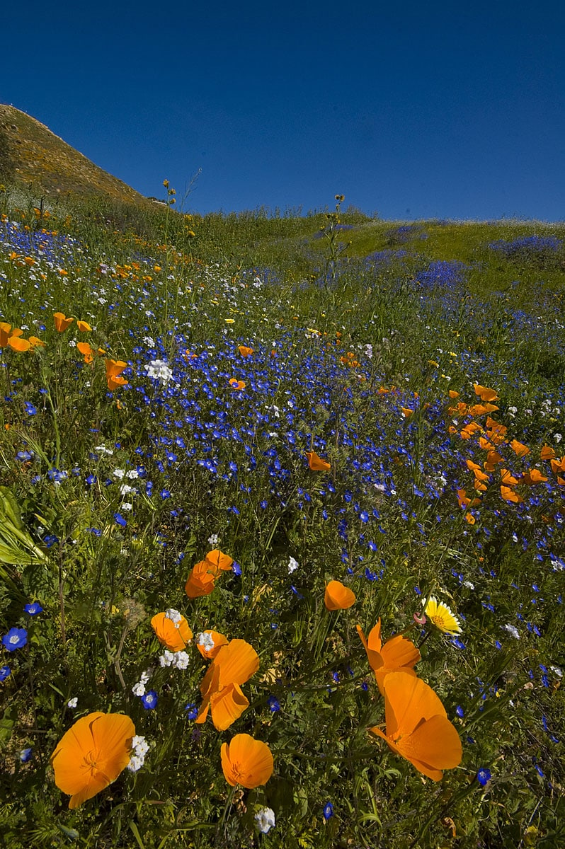 Meadows near Lake Elsinore, California