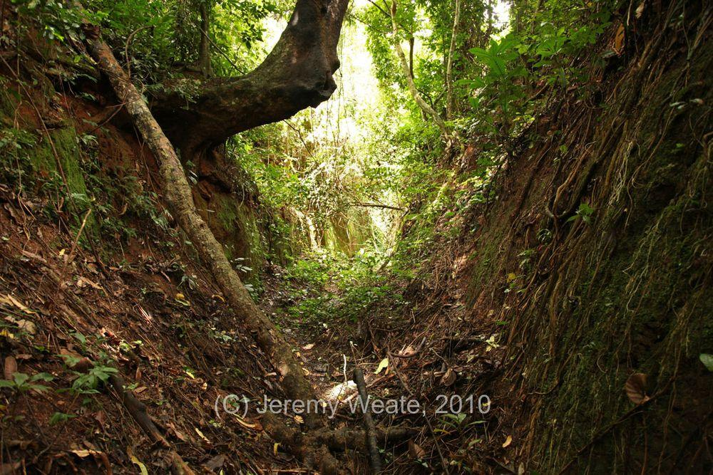 Inside the Sungbo's Eredo ditch, Nigeria