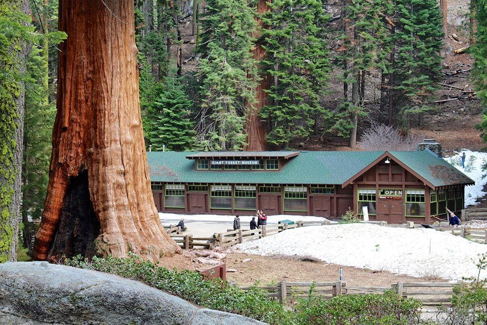 Giant Forest Museum, California