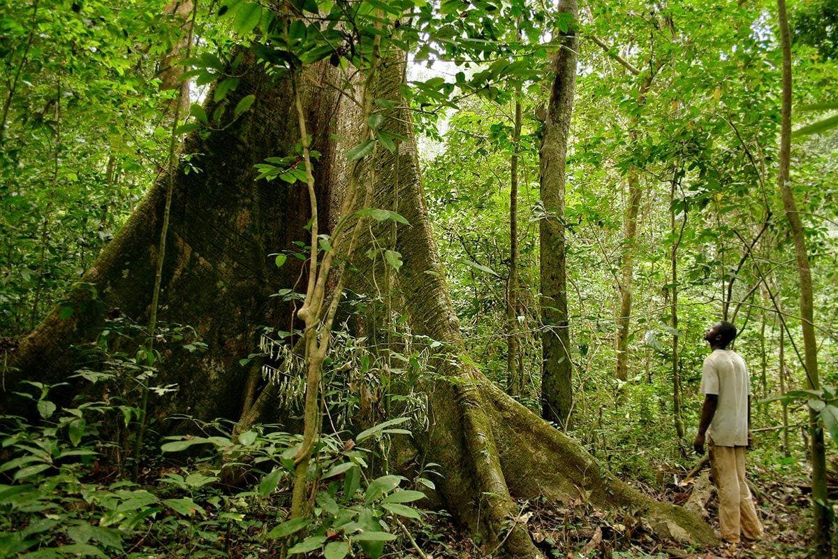 Rainforest in Gabon