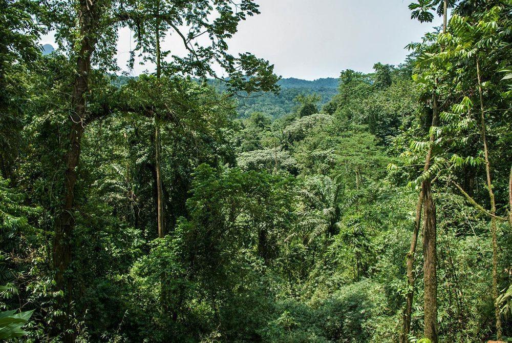 Rainforest in the central São Tomé