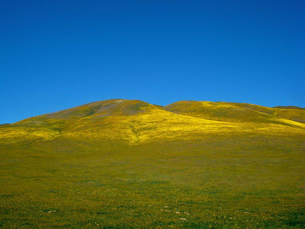Gorman Hills in spring, California