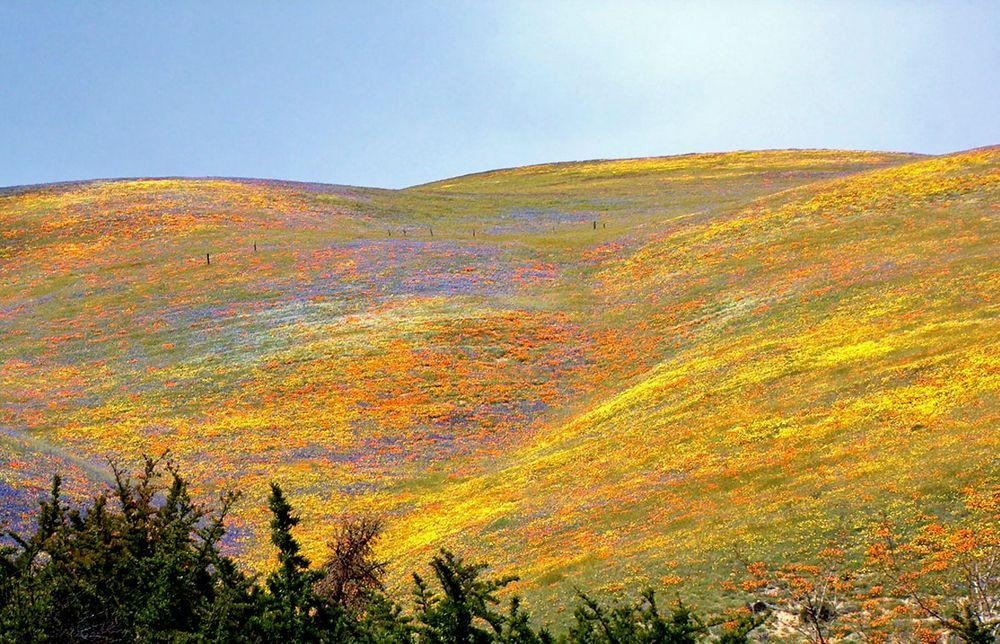 Spring colors of Gorman Hills, California