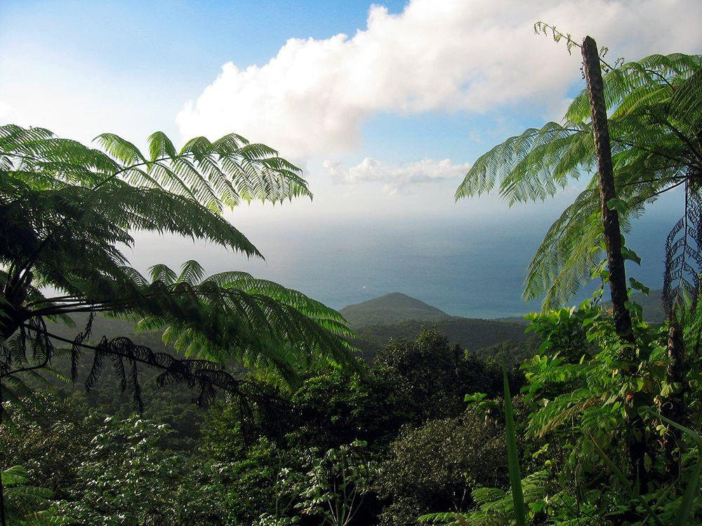 Rainforest in Guadeloupe