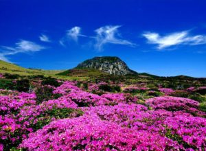 Landscape in Jeju Island, South Korea