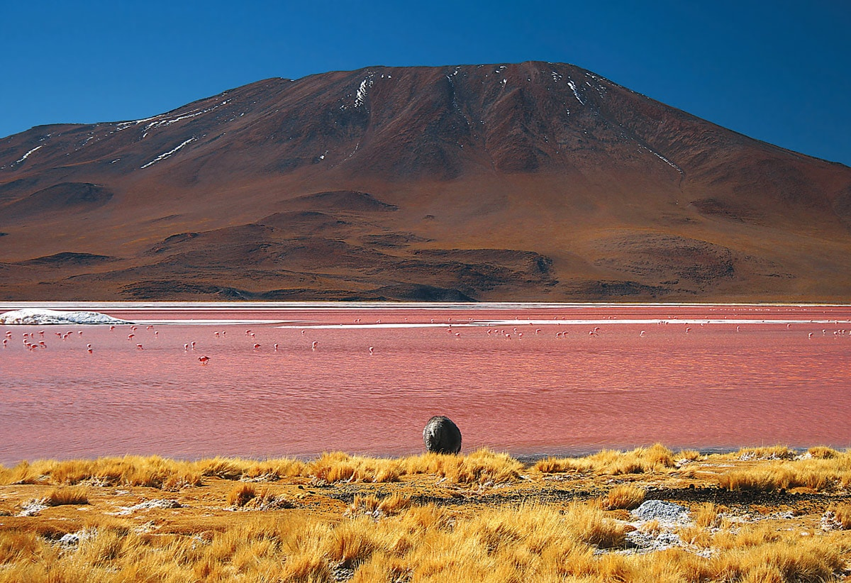 Laguna Colorada, Potosí in Bolivia