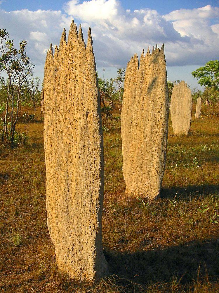 Magnetic termite mounds, Litchfield National Park in Australia