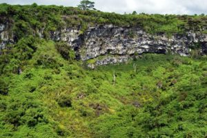 Scalesia forest around and in Los Gemelos sinkhole, Galapagos