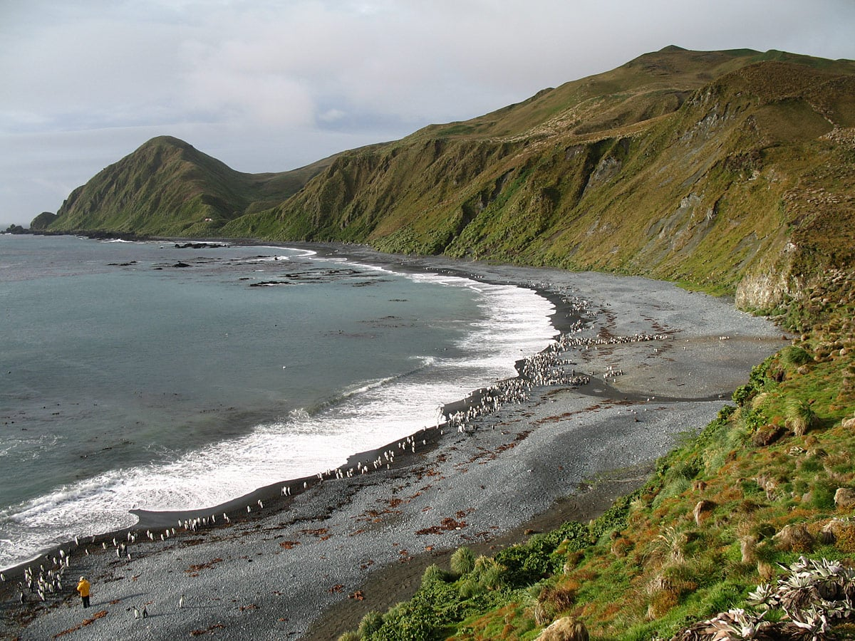 Macquarie Island, Sandy Bay