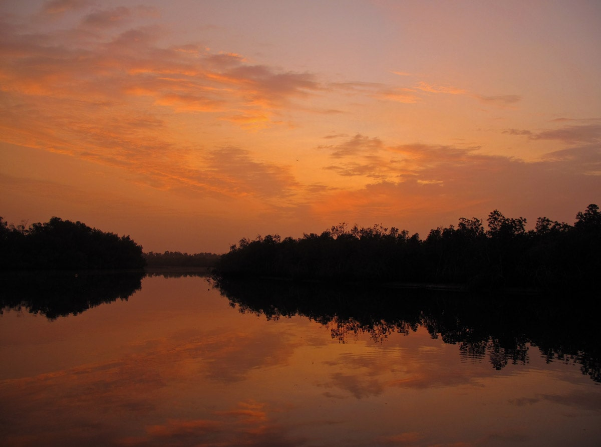 Night falls over the mysterious Makasutu Forest, Gambia