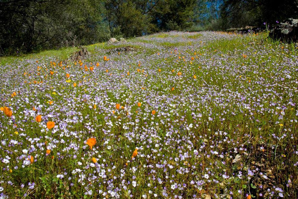 Meadows along the Hite Cove Trail, California