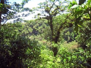 Cloud forest of Mombacho, Nicaragua