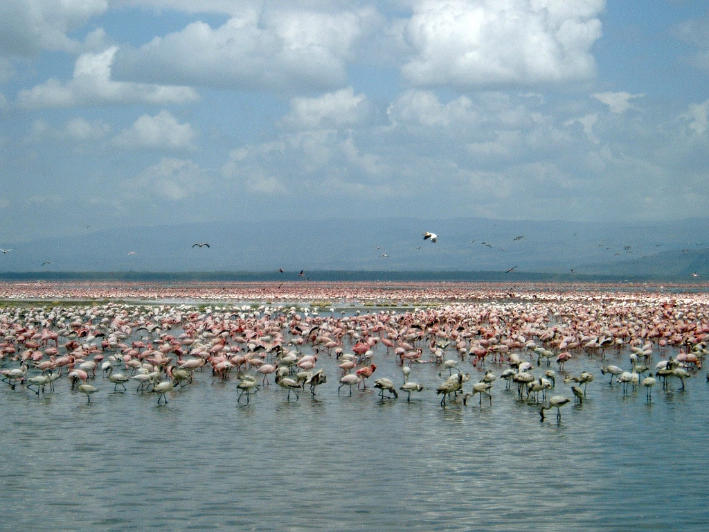 Millions of flamingos in Lake Nakuru, Kenya