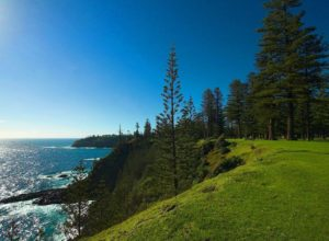 Norfolk Pines, Puppy Point, Norfolk Island. This location is a bit outside the national park
