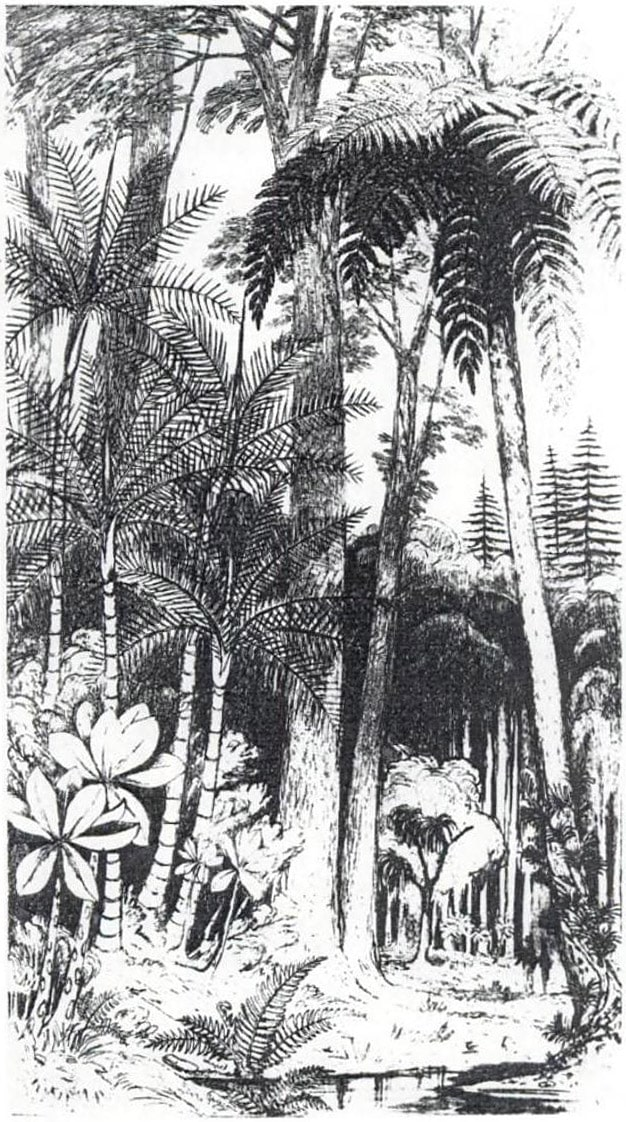 Lowland subtropical forest in Norfolk Island before the human disturbance