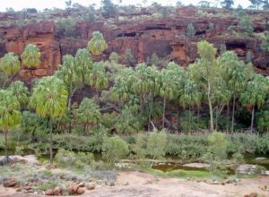 Palm Valley - the only place in the central deserts of Australia where grow palms