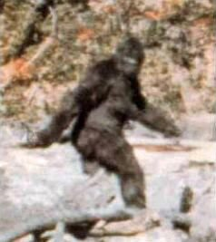 Image of purported sasquatch, filmed in California, United States, 1967. Specialists are unsure whether this is hoax or real sighting