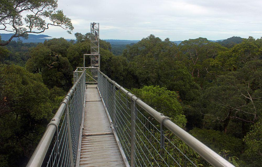 Walkway over the rainforest in Temburong, Brunei
