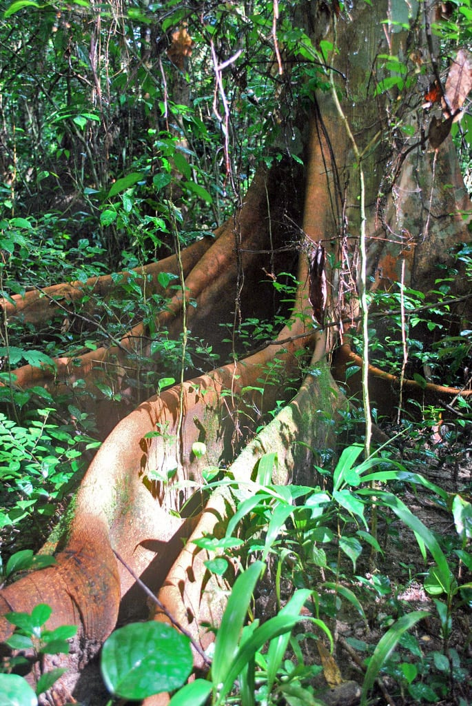 Rainforest in Tiwai Island, Sierra Leone