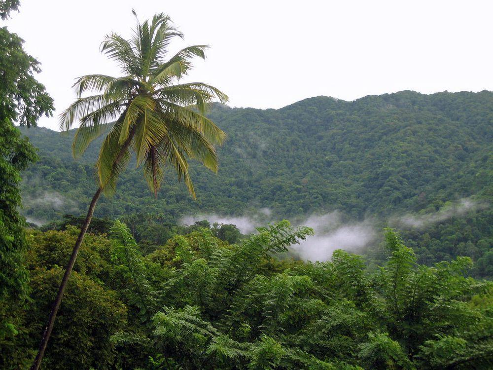 Tobago Main Ridge Forest