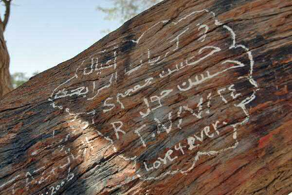Graffiti on the bark of Tree Of Life, Bahrain