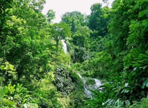 Tufton Hall Waterfall, Grenada