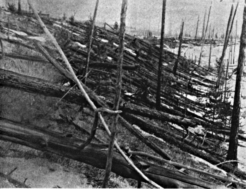 Fallen trees in the site of Tunguska event in 1929, Russia