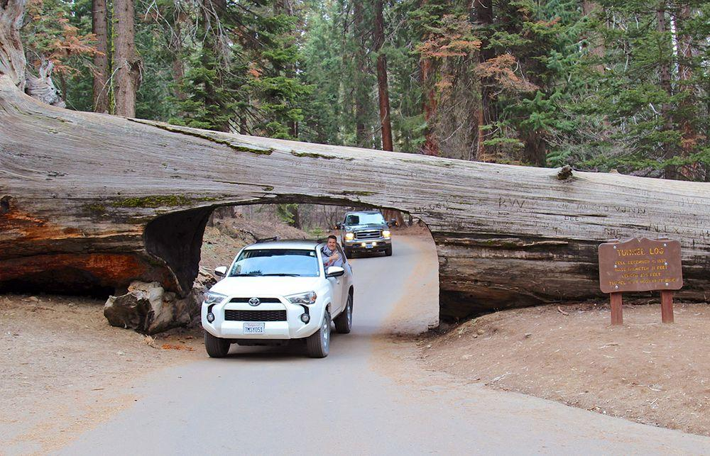 Tunnel Log, California