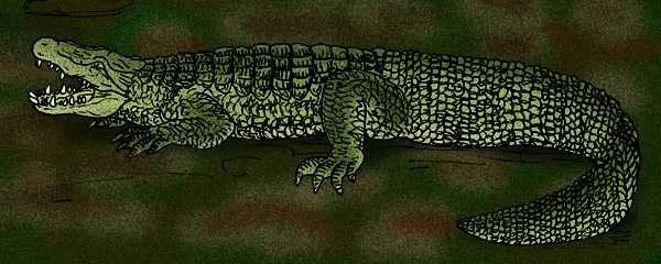 Volia vitiensis - extinct terrestrial crocodile, Fiji