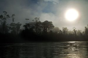 The mysterious Yasuni forest, Ecuador